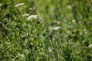 Ferienwohnung auf dem Feldsteinhof - Wildblumenwiese hinter der Feldsteinscheune